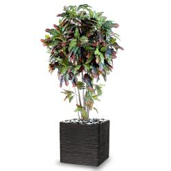 Croton Artificiel Troncs Bois en pot H 110 cm Vert-rouge