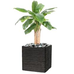 Bananier artificiel en pot 3 Troncs naturel H 132 cm Vert