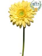 Gerbera artificiel, H 48 cm Jaune - BEST